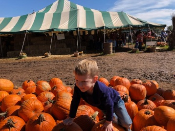 Searching for a Punkin