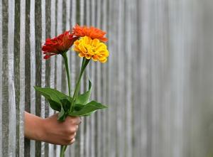 mwm bp 7 simple mood hand holding flowers nov 2018