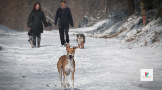Winter Safety For Your Pets